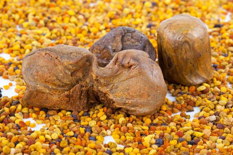 Γύρη και propolis μελισσών στοκ φωτογραφίες