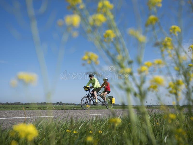 Γύροι ζεύγους διαδοχικοί στη εθνική οδό κάτω από το μπλε ουρανό που βλέπει την άνοιξη μέσω των κίτρινων λουλουδιών στοκ εικόνα με δικαίωμα ελεύθερης χρήσης