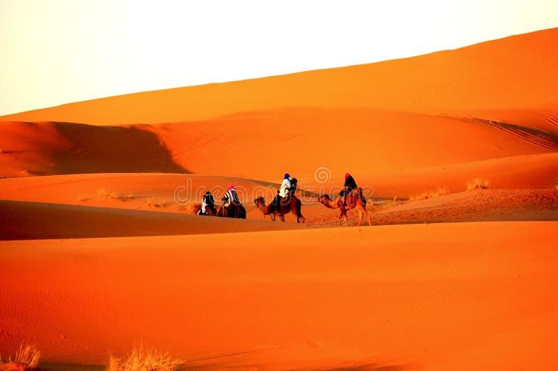 Γύρος καμηλών κάτω από την ανατολή στην έρημο Σαχάρας στοκ φωτογραφία