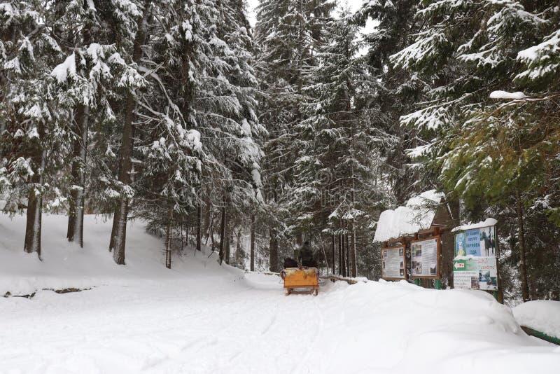 Γύρω από τα βουνά και το δάσος χιονιού στοκ εικόνα