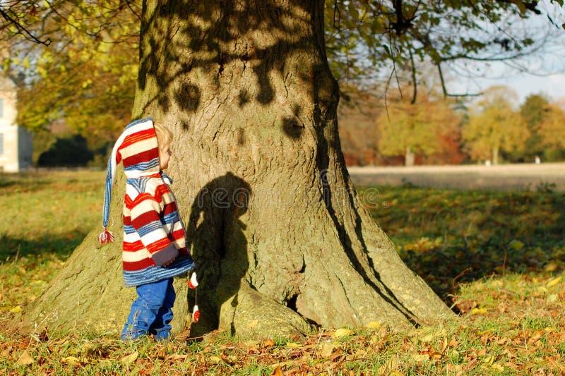 Γύρω από το δέντρο στοκ εικόνες