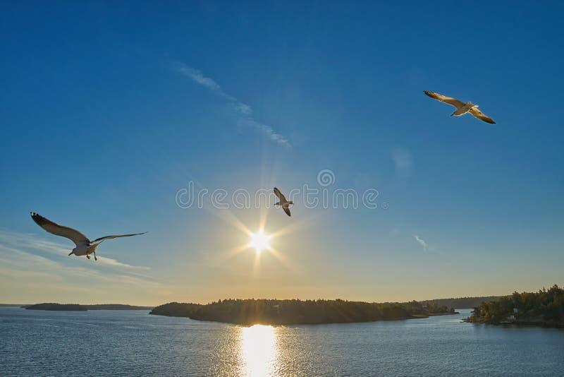 Γλάροι που πετούν πέρα από τη θάλασσα και την ακτή στοκ φωτογραφία με δικαίωμα ελεύθερης χρήσης
