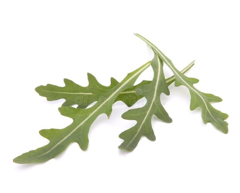 Γλυκά φύλλα μαρουλιού σαλάτας ή πυραύλων rucola στοκ εικόνες με δικαίωμα ελεύθερης χρήσης