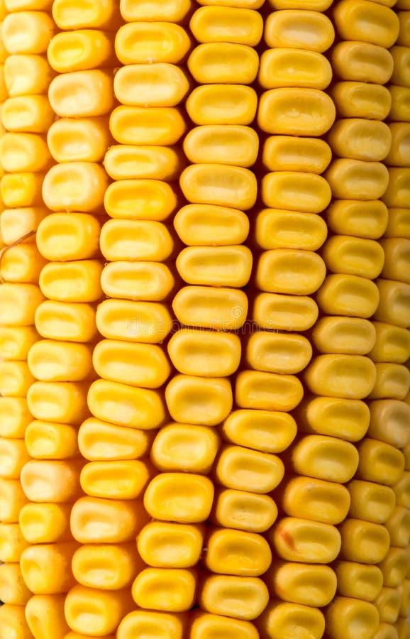 Γλυκιά κίτρινη μακροεντολή σπαδίκων καλαμποκιού στοκ εικόνα με δικαίωμα ελεύθερης χρήσης