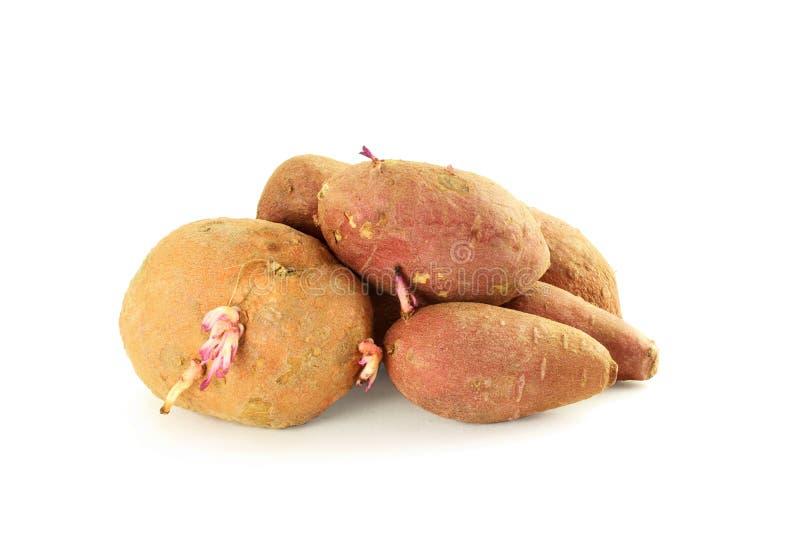 Γλυκιά πατάτα στην άσπρη ανασκόπηση στοκ φωτογραφία με δικαίωμα ελεύθερης χρήσης