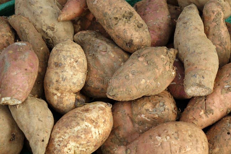 Γλυκιά πατάτα στοκ φωτογραφία με δικαίωμα ελεύθερης χρήσης