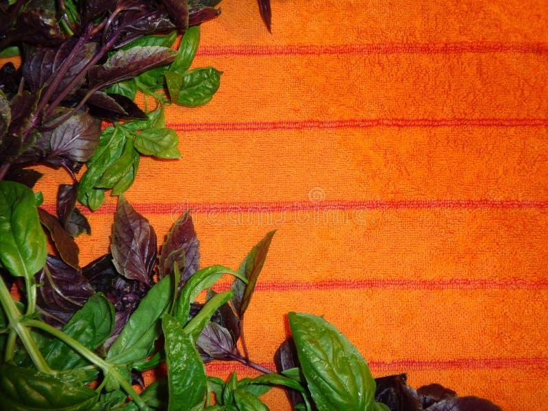 Γλυκός και πορφυρός βασιλικός σε μια πορτοκαλιά πετσέτα, υπόβαθρο οριζόντιο στοκ εικόνες