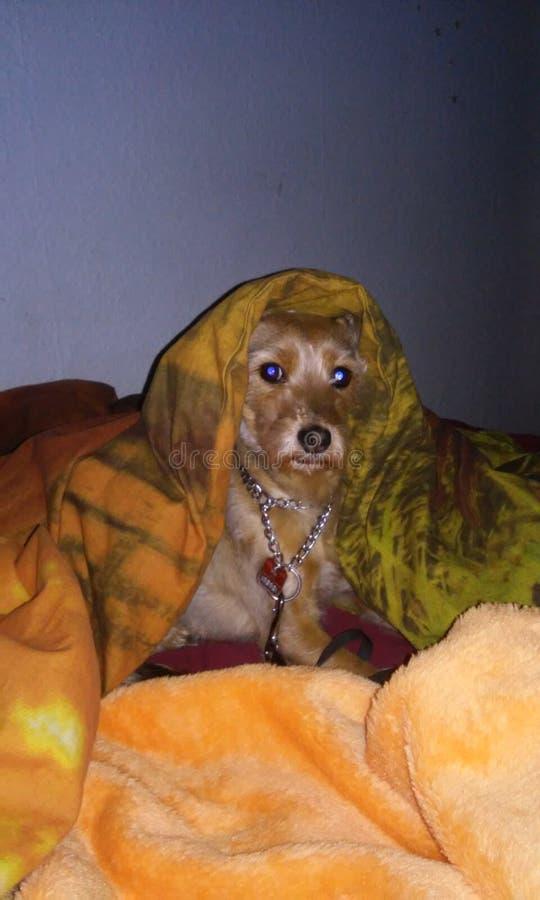 Γλυκό doggi ύπνου στοκ εικόνες