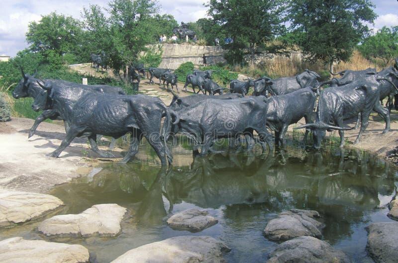Γλυπτό βοοειδών Longhorn στον πρωτοπόρο Plaza, Ντάλλας TX στοκ εικόνες