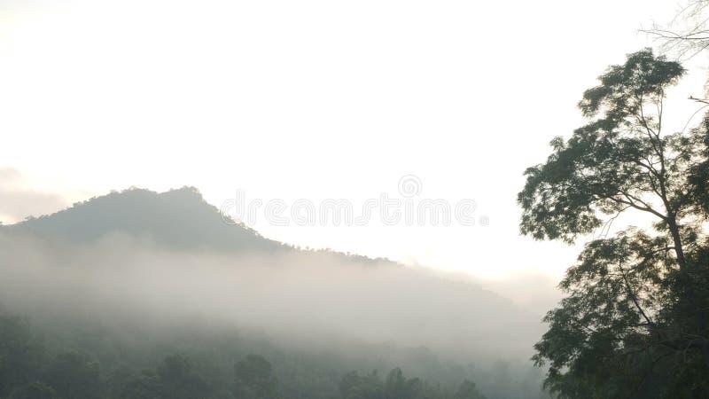 Δάση με την ομίχλη μπροστά από το βουνό στοκ φωτογραφίες