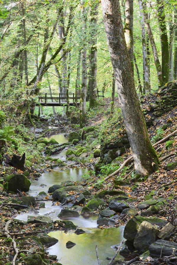 δάση ρυακιών στοκ φωτογραφία με δικαίωμα ελεύθερης χρήσης