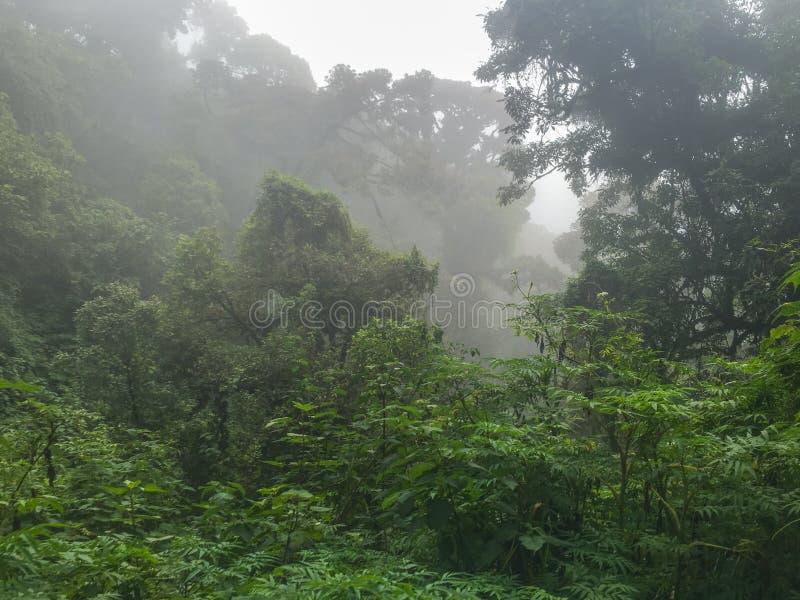Δάση σύννεφων στο ηφαίστειο Acatenango, Γουατεμάλα στοκ φωτογραφία