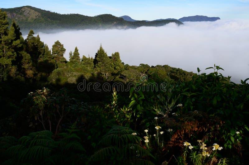 Δάση της Virgin, Κεράλα, δάσος Shola στοκ εικόνες με δικαίωμα ελεύθερης χρήσης