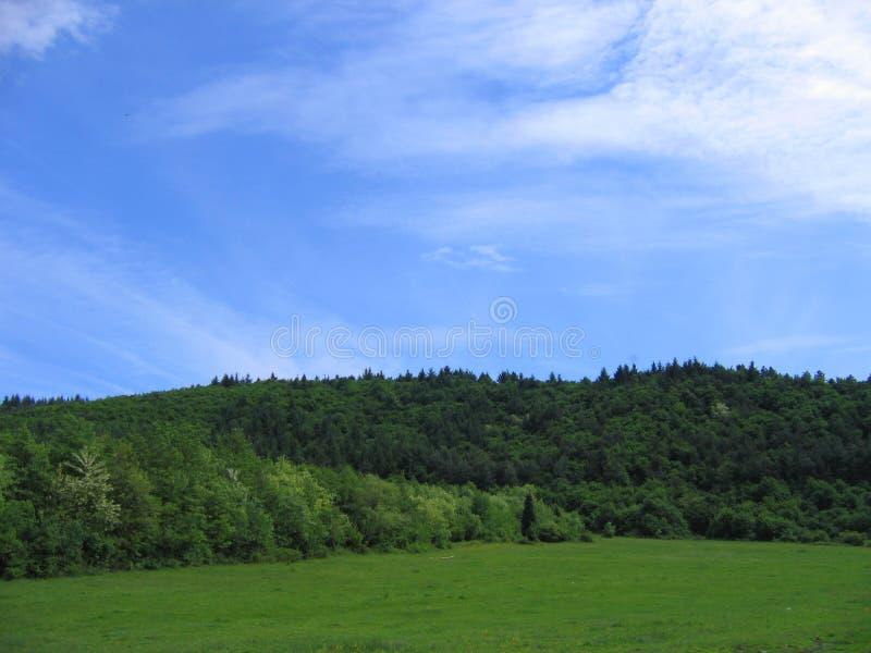 δάση στοκ εικόνα