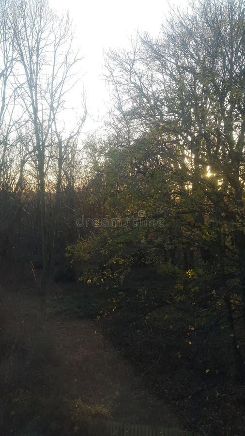 δάση στοκ φωτογραφίες με δικαίωμα ελεύθερης χρήσης