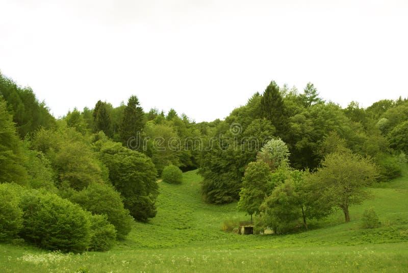 δάση στοκ φωτογραφίες