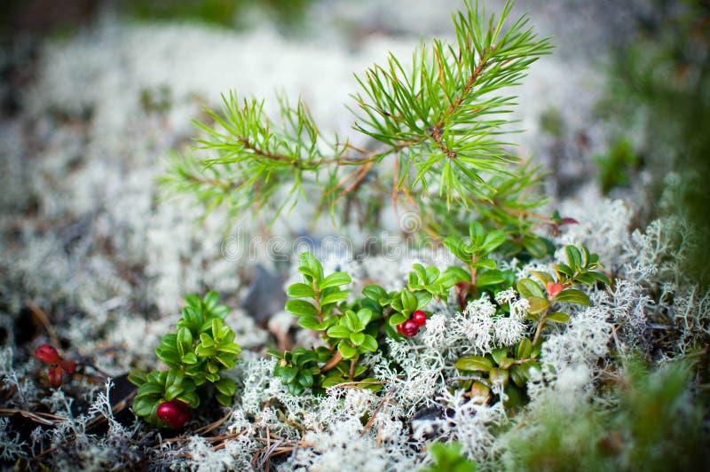Δάση Rokua στοκ εικόνες