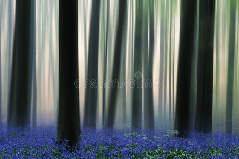 Δάσος άνοιξη που καλύπτεται με τα wildflowers bluebell στοκ εικόνα με δικαίωμα ελεύθερης χρήσης