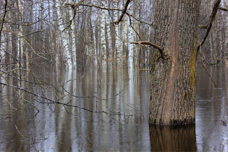 Δάσος άνοιξη, Ρωσία στοκ φωτογραφίες με δικαίωμα ελεύθερης χρήσης