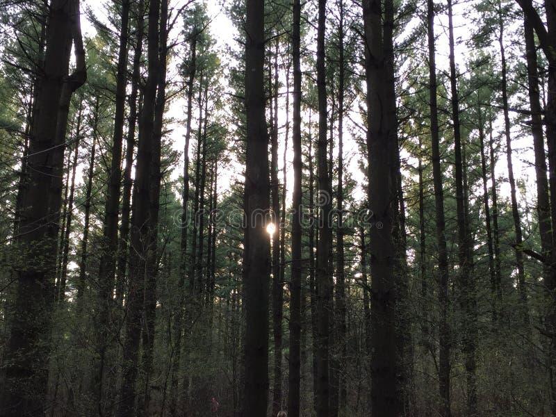 Δάσος αμέσως πριν από το ηλιοβασίλεμα στοκ εικόνες με δικαίωμα ελεύθερης χρήσης