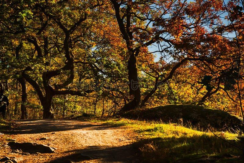 Δάσος από την πτώση στοκ φωτογραφία με δικαίωμα ελεύθερης χρήσης