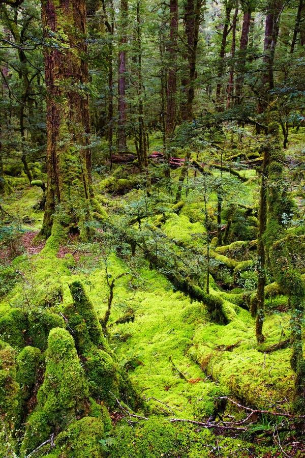 δάσος αρχέγονο στοκ φωτογραφίες