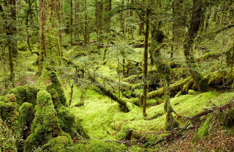 δάσος αρχέγονο στοκ φωτογραφία με δικαίωμα ελεύθερης χρήσης