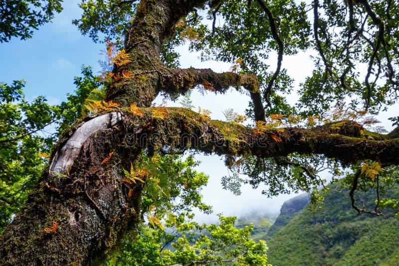 Δάσος δαφνών στοκ εικόνα με δικαίωμα ελεύθερης χρήσης
