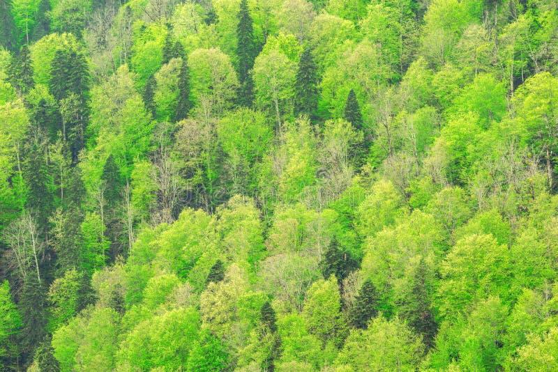 Δάσος βουνών άνοιξη στοκ εικόνες