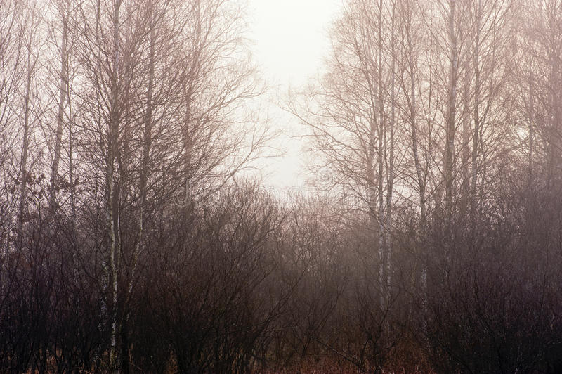δάσος βραδιού στοκ εικόνα με δικαίωμα ελεύθερης χρήσης