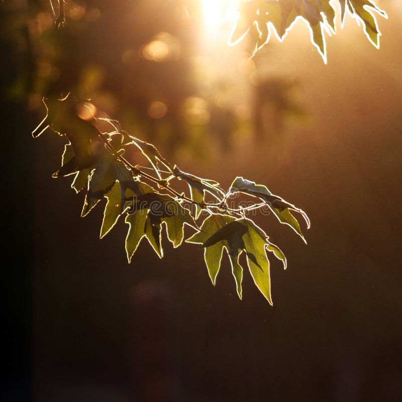 δάσος βραδιού στοκ εικόνες με δικαίωμα ελεύθερης χρήσης
