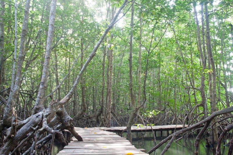 δάσος γεφυρών μέσα στο μα&ga στοκ φωτογραφίες