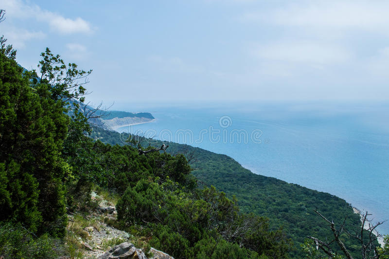 Δάσος θαλασσίως στοκ εικόνες με δικαίωμα ελεύθερης χρήσης