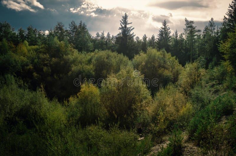 Δάσος θερινού ηλιοβασιλέματος στοκ φωτογραφίες με δικαίωμα ελεύθερης χρήσης