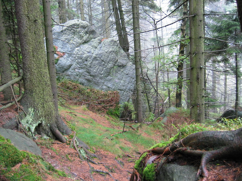 Download δάσος ΙΙ στοκ εικόνα. εικόνα από βελόνα, πέτρα, φύση, θύελλα - 51069