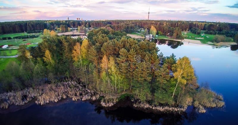 Δάσος λιμνών και πεύκων στοκ φωτογραφία με δικαίωμα ελεύθερης χρήσης