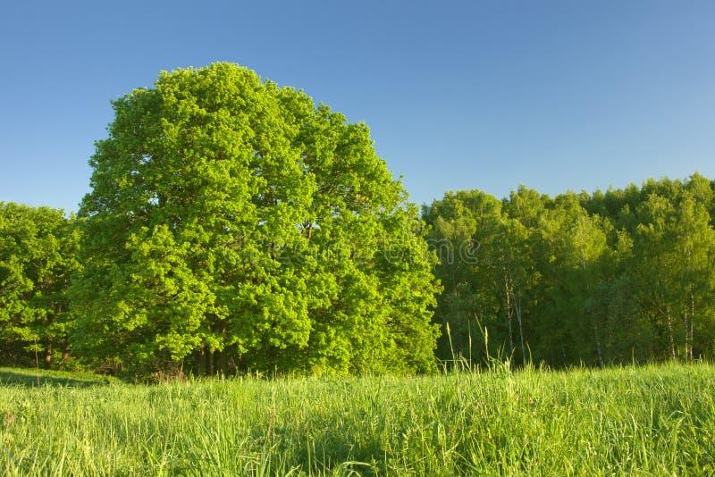 Δάσος κάτω από το φως του ήλιου στοκ φωτογραφία με δικαίωμα ελεύθερης χρήσης