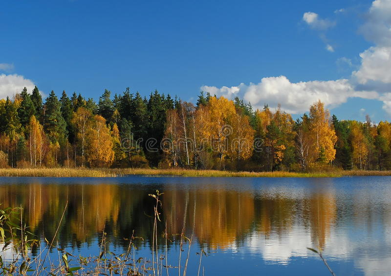 Δάσος και αντανάκλαση στοκ φωτογραφία