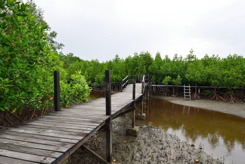 Δάσος και γέφυρα μαγγροβίων στοκ εικόνα με δικαίωμα ελεύθερης χρήσης