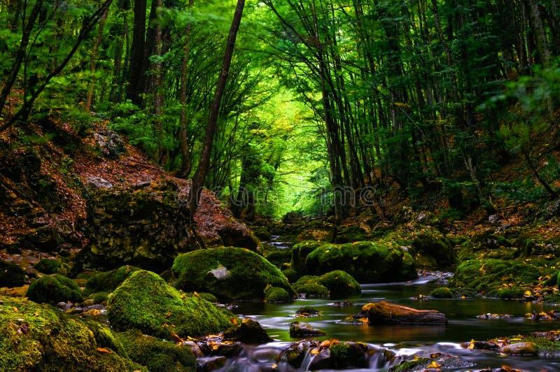 Δάσος κασσίτερου Strean στοκ φωτογραφία