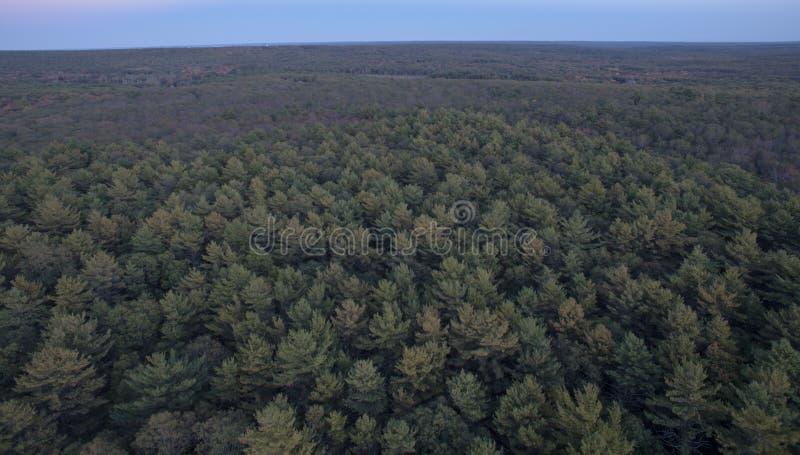 Δάσος κομητειών του Κεντ στοκ φωτογραφία