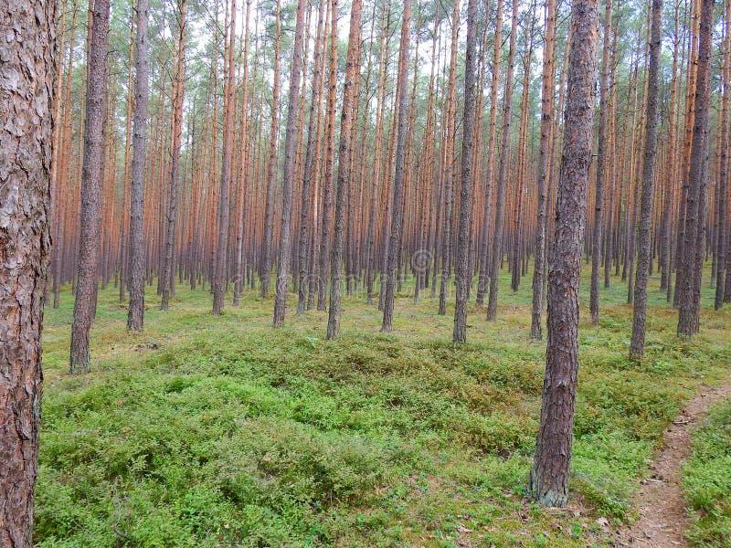 Δάσος κοντά στη λίμνη Turawa στοκ φωτογραφίες με δικαίωμα ελεύθερης χρήσης