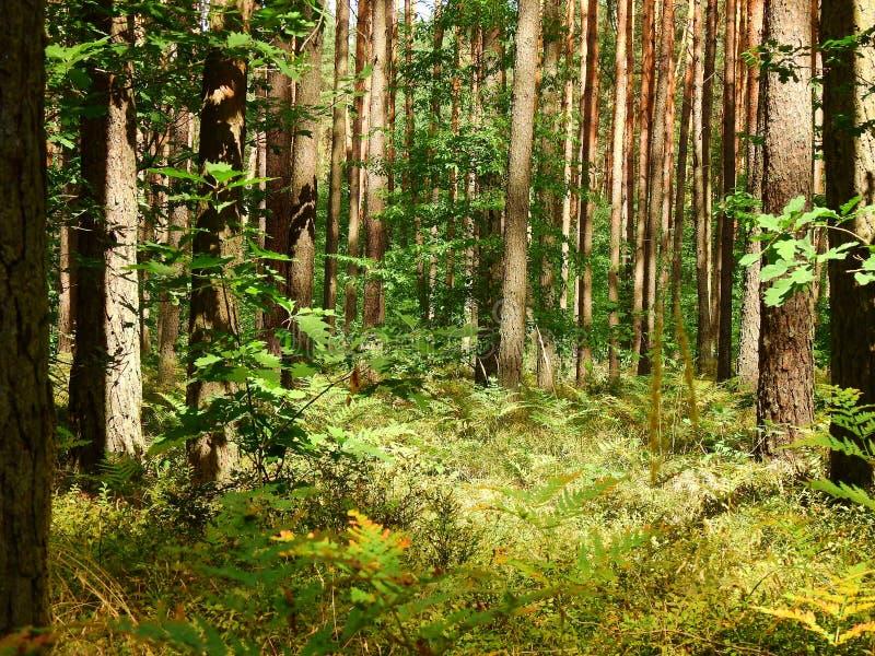 Δάσος κοντά στη λίμνη Turawa στοκ εικόνα με δικαίωμα ελεύθερης χρήσης