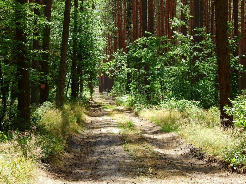 Δάσος κοντά στη λίμνη Turawa στοκ φωτογραφία με δικαίωμα ελεύθερης χρήσης