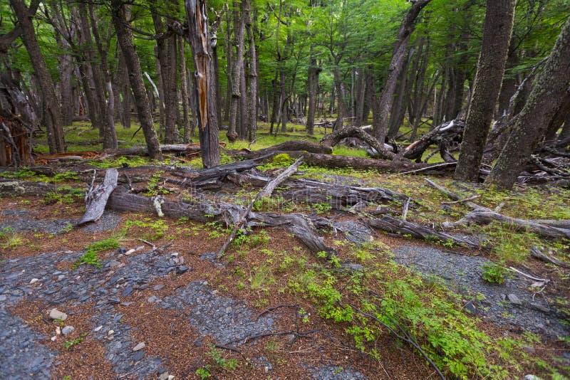 Δάσος κοντά στο πόδι των βουνών των Άνδεων στοκ εικόνες