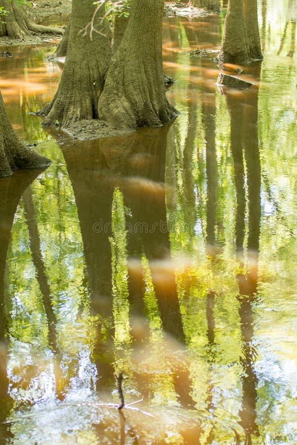 Δάσος κυπαρισσιών και έλος του εθνικού πάρκου Congaree στο νότο Caro στοκ εικόνα