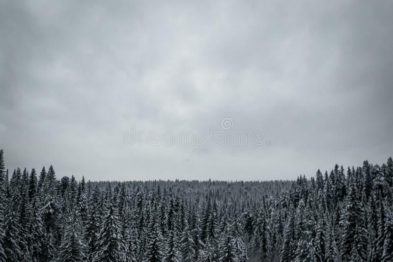 Δάσος κωνοφόρων το χειμώνα στοκ φωτογραφία με δικαίωμα ελεύθερης χρήσης