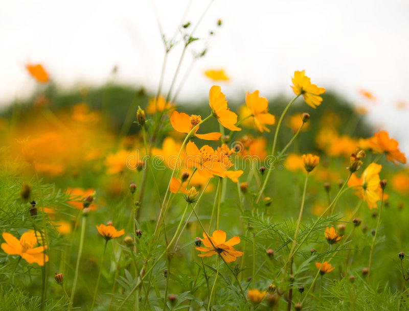 δάσος λουλουδιών στοκ εικόνα με δικαίωμα ελεύθερης χρήσης