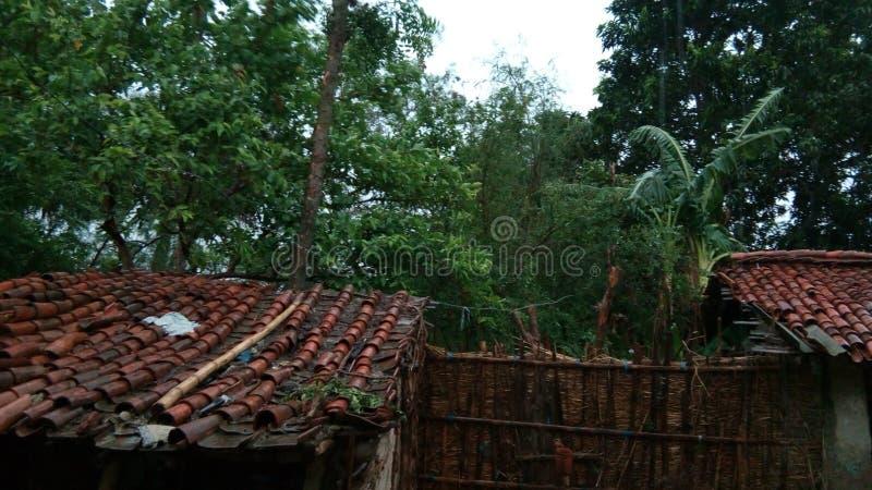 Δάσος μέσα στο σπίτι στοκ φωτογραφία