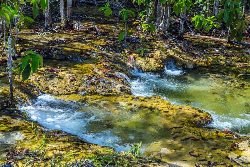 Δάσος μαγγροβίων καταρρακτών σε Krabi στην Ταϊλάνδη στοκ φωτογραφία με δικαίωμα ελεύθερης χρήσης
